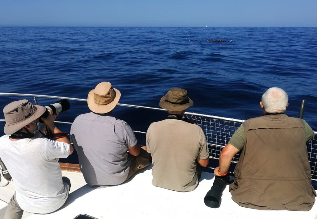 Pelagic birding trip in Andalucia. Photo by Javi Elorriaga / Birding The Strait